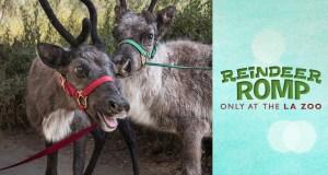 The LA Zoo Reindeer Romp @ Los Angeles Zoo