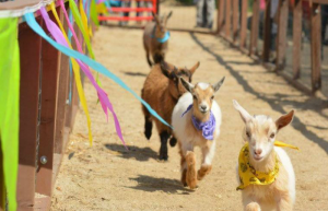 Underwood Family Farm's Easter Springtime Festival Is Happening Now Through April 17th
