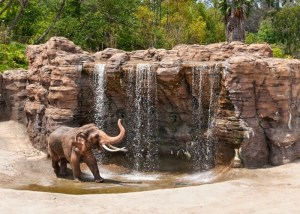 Join The LA Zoo In Their World Elephant Day Celebration August 12th-13th