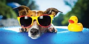 Doggie Splash @ McCambridge Pool | Burbank | California | United States