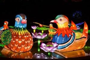 Chinese Lantern Festival Birds
