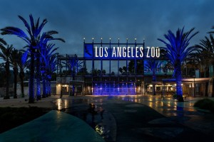 LA Zoo Goes Blue For The LA Rams
