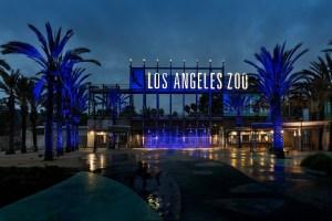 LA Zoo Goes Blue For The LA Rams