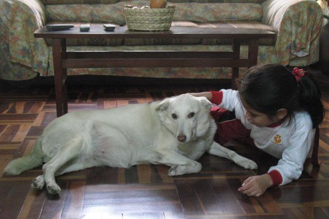 Vida con perros (3/3)