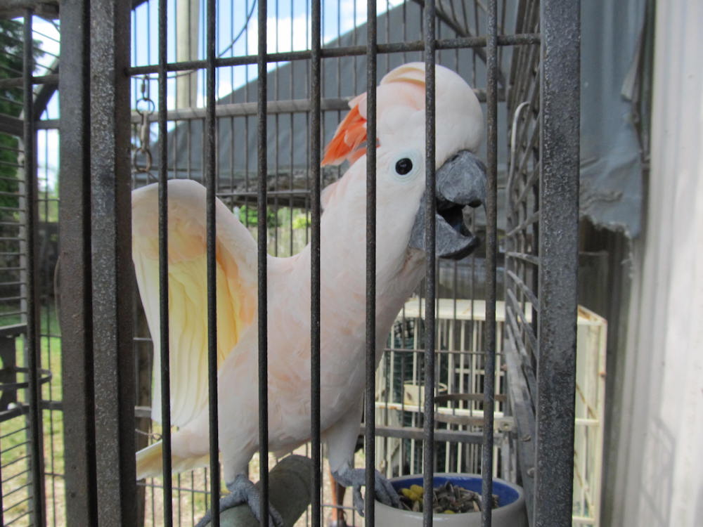 Excited Bird