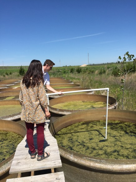 Keunyea Song and Austin Brewer installing sensors into a mesocosm for UAV comparison.