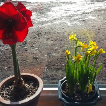 January 31 flower count