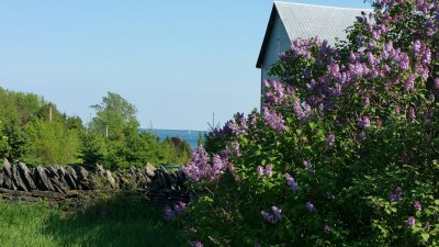 Lilac and wall