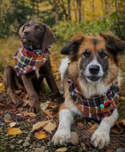 Gift Guide for Him - Shop Local YXH - Medicine Hat - Canadian Mountain Pet Wear