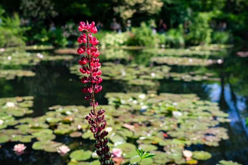 Monet House and Gardens, Giverny, France