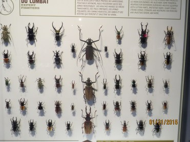 Assorted Beetles at the Insectarium in Montreal, Quebec