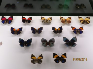 Assorted Butterflies at the Insectarium in Montreal, Quebec