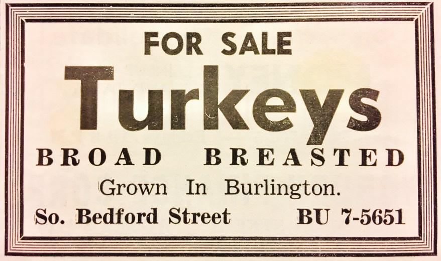 Turkeys ad Burlington, MA