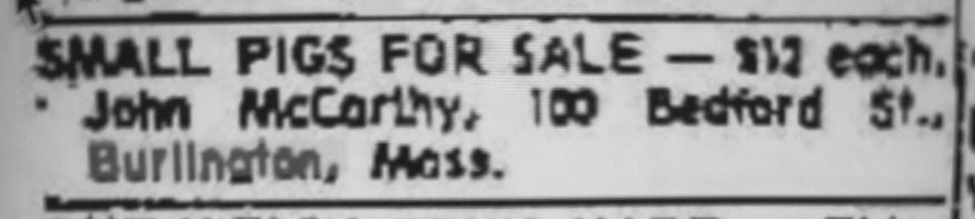 McCarthy farm pigs ad, July 1968 Burlington MA