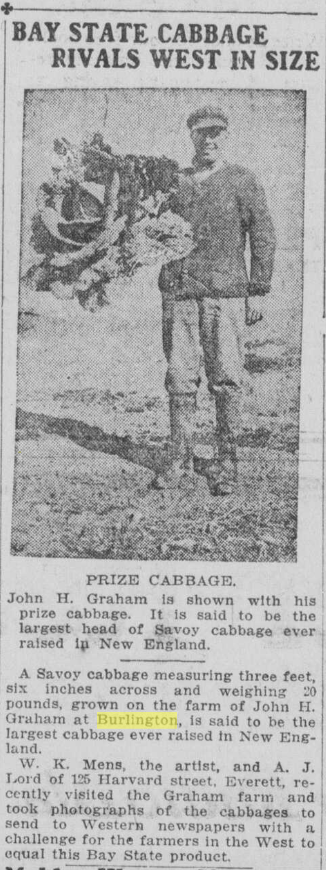John Graham cabbage 1916