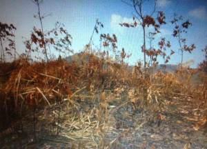 မီးလောင်ခံထားရသောရာဘာခြံနေရာ(IMNA)
