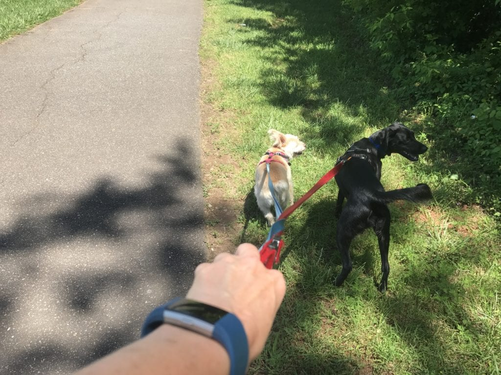 Project 90 Dog Walk