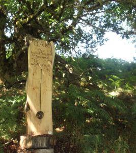 carved wooden slab under a tree, engraved with poem