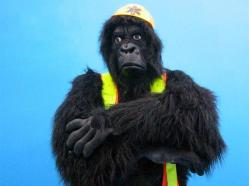 Abram: Safety Ape -- PHOTO: AoB