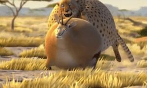 animals humping