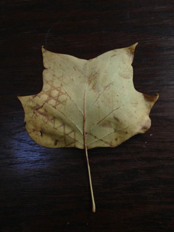 alex grey leaf-768x1024