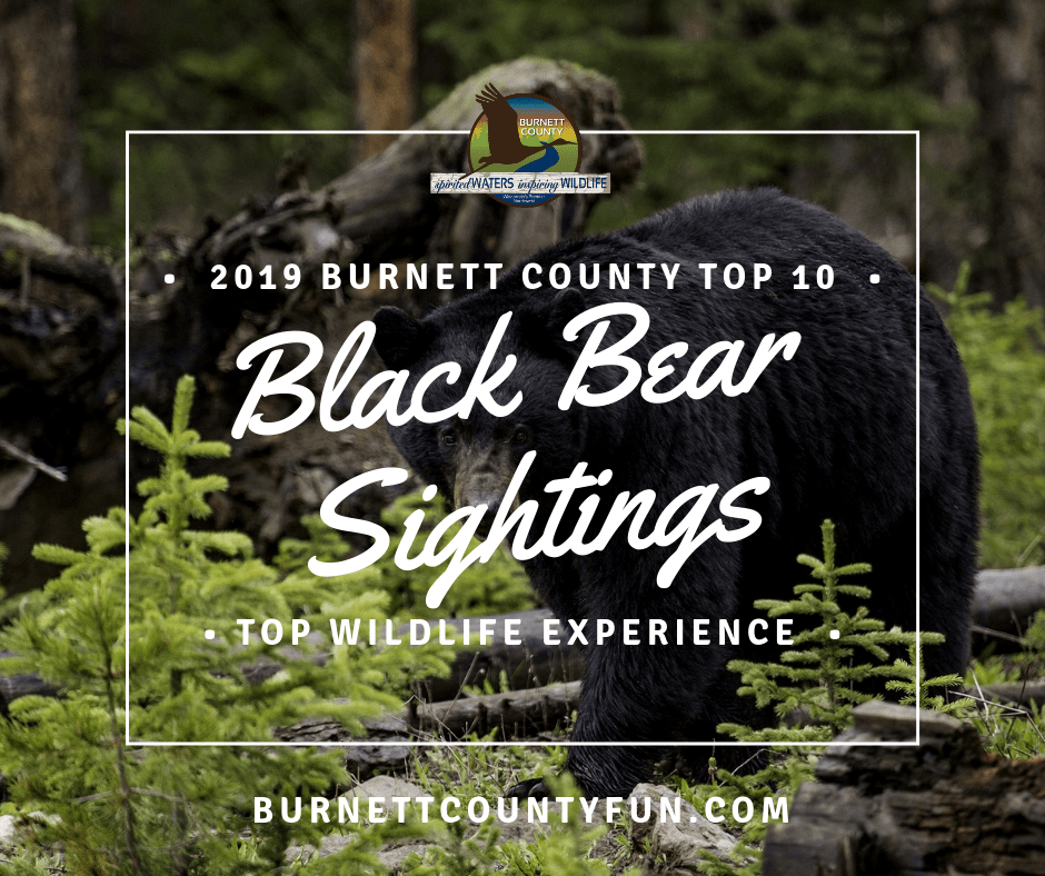 black bear sightings