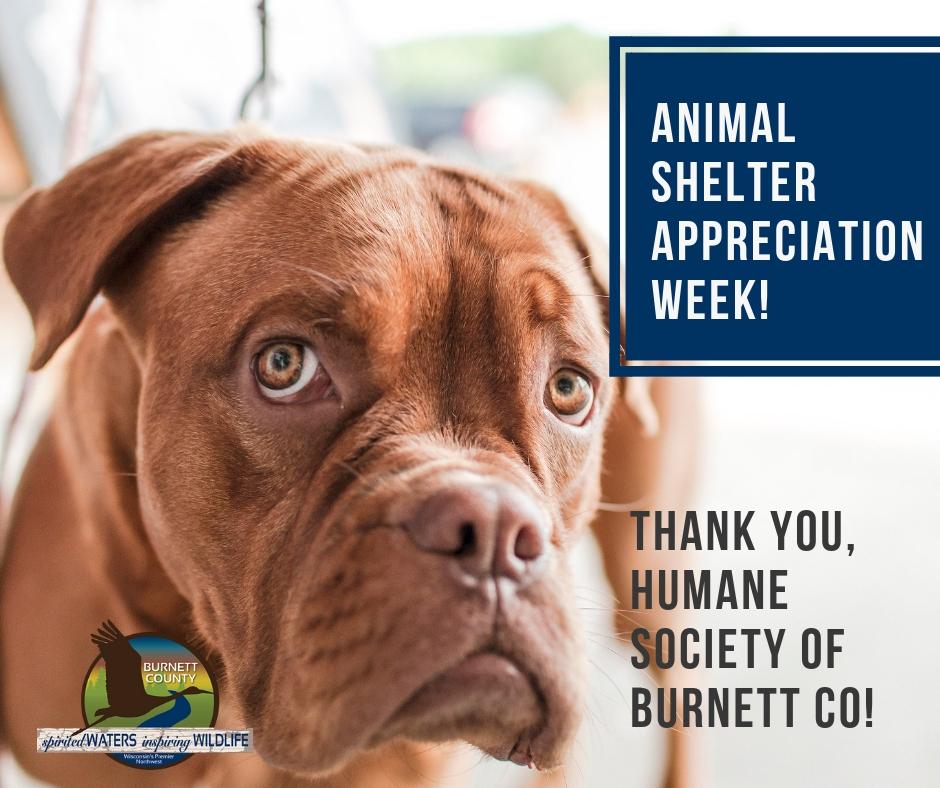 Animal shelter appreciation week!