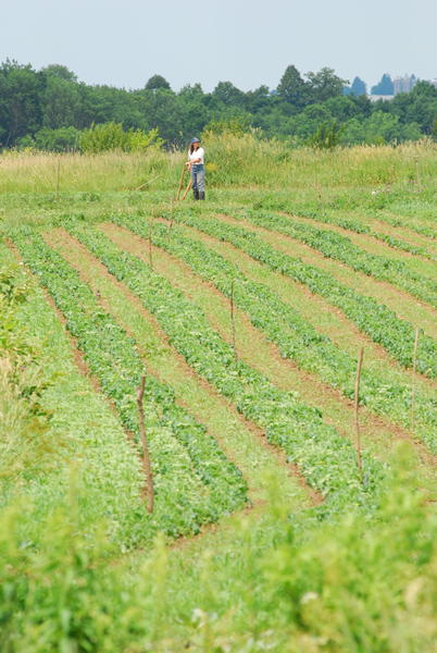 Cultivating organic crops on Mark Shepard's farm.