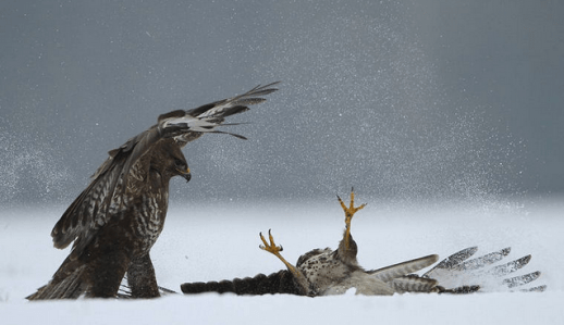 Re-creation of Bushwickians fighting over kale as snow fell around them