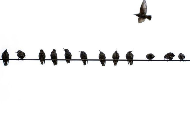 Birds sitting on telephone wire.