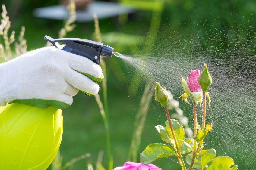 DIY pest control spray bottle spraying flower.
