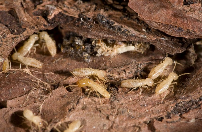 Group of termites.
