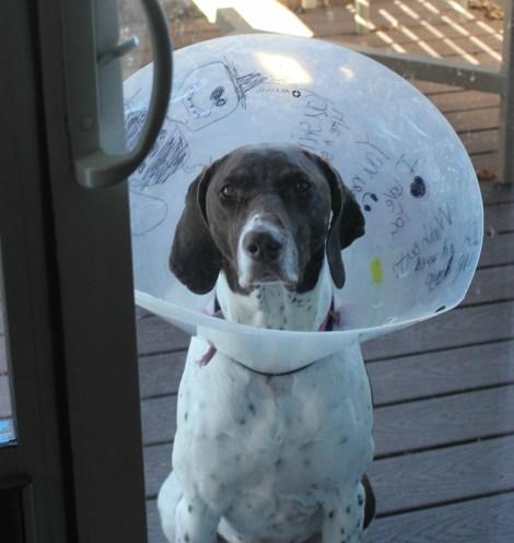 cone dog