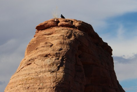 bird on delicate arch