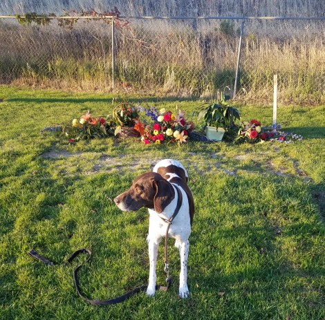 dog in cemetary