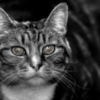 Cat Ears, Eyes