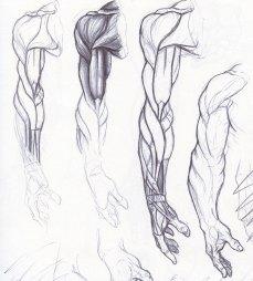 Penwork_anatomy_02