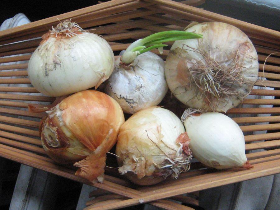 Noonday Onions