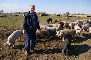 Paul Willis and his piggies
