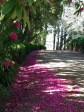 Pink pathway in the springtime