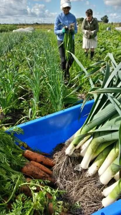 veg_harvest