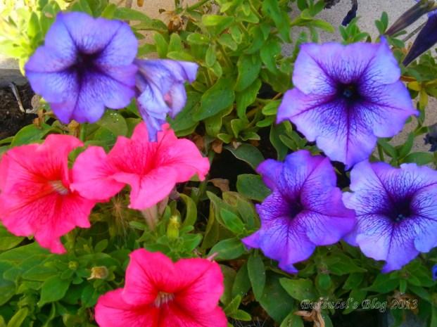 Lunea nici florile nu se ofilesc!