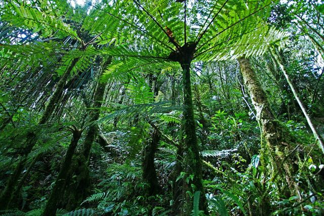2021 Must Be a Turning Point for Forests. 2020 Data Shows Us Why