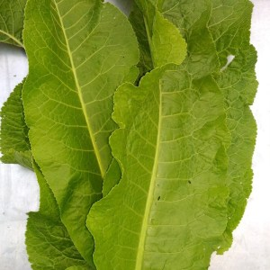 horseradish_leaves