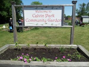 Calvin Park Community Garden 12