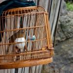Bahaya burung