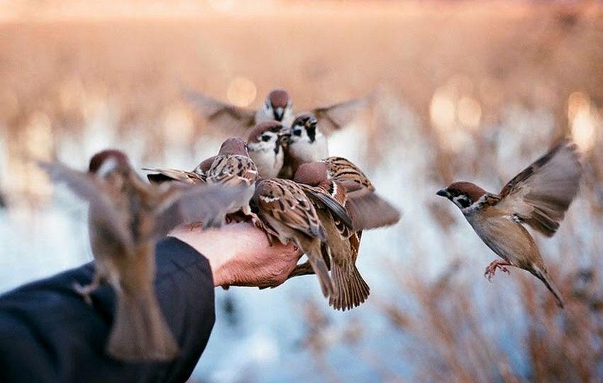 5 Cara Menjinakkan Semua Jenis Burung Kicau Tanpa Mengeluarkan Biaya