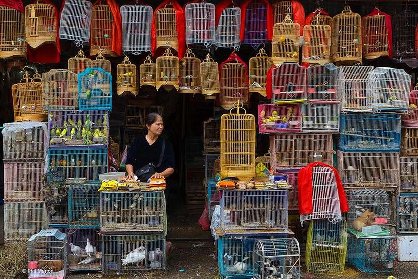 Pasar Burung (flickr.com)