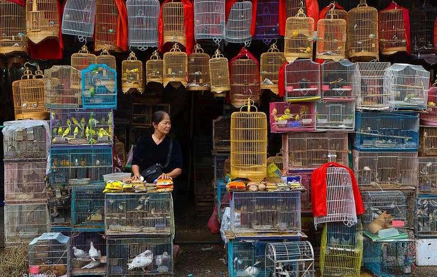10 Jenis Burung Kicau Paling Populer di Pulau Jawa Indonesia
