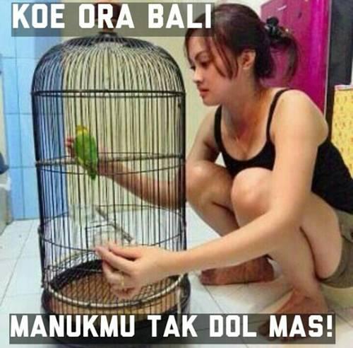 45 meme lucu tentang burung untuk menghibur kicau mania
